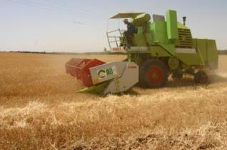 Agriculture algerie c r ales en alg rie for Habitat rural en algerie pdf